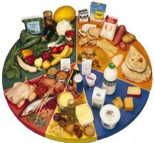 الوجبة الغذائية اليومية وماذا يجب أن تحتوي