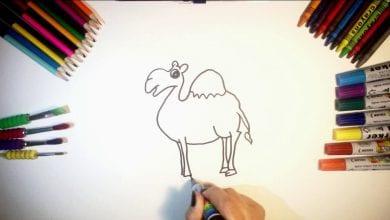 Photo of تعليم الاطفال طريقة رسم جمل بالصور