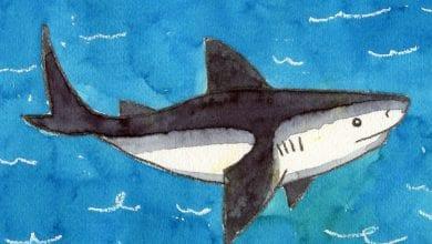 Photo of تعليم الطفل طريقة رسم القرش بالخطوات