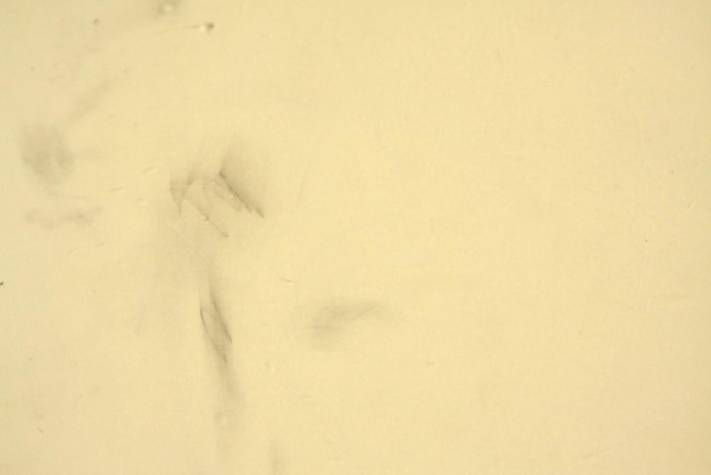 طريقة تنظيف الحائط من الـوان الشمع بالصور