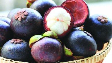 Photo of فوائد فاكهة المانجوستين الغذائية والصحية المدهشة