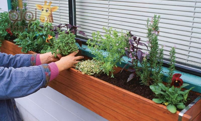 زراعة الاعشاب بالمنزل بكل سهولة