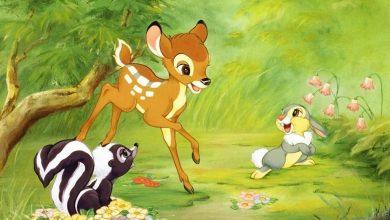 Photo of الحيوانات الأربعة قصة لتعليم الطفل التعاون والوفاء