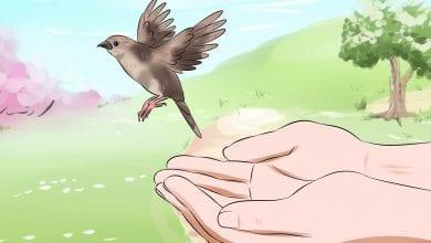 Photo of ساقي الطيور قصة تعليم الطفل العناية بالطيور