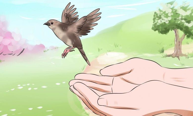 ساقي الطيور قصة تعليم الطفل العناية بالطيور
