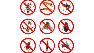 Photo of نصائح للتخلص من حشرات الصيف