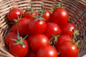 فوائد الطماطم للصغار وللكبار