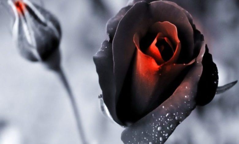 إحذر الاهمال في الحب يتسبب في ذبول الحب سريعاً